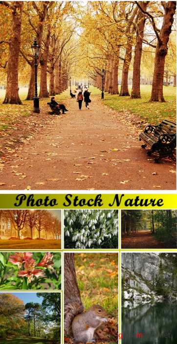 Photo Stock: Nature