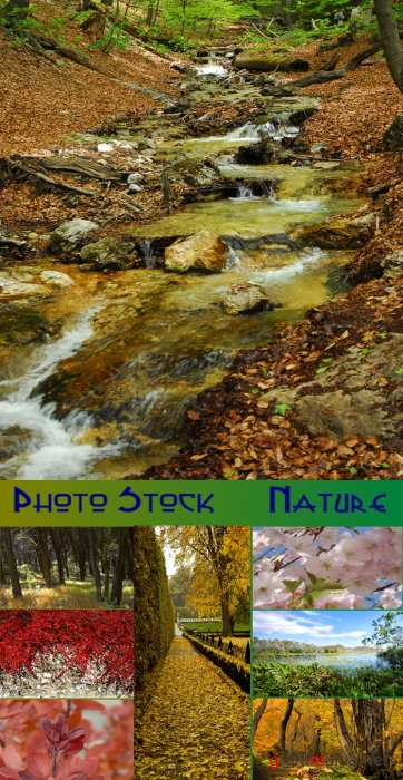Photo Stock : Nature