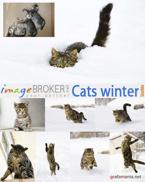 Cats winter | Коты зимой
