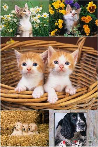 Wallpapers - 40 Cute Animals Pack