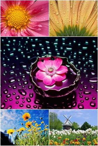 Wallpapers - Flowers Pack#2