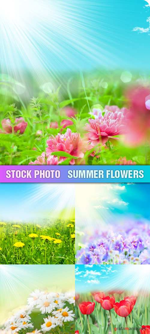 Stock Photo - Summer Flowers