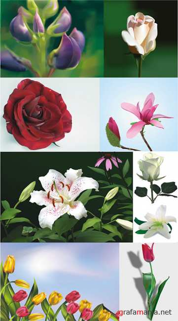 Realistic vector flowers