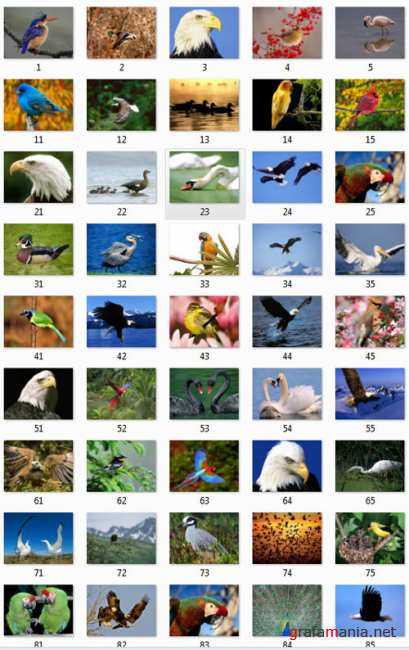 Amazing Birds Wallpapers Pack
