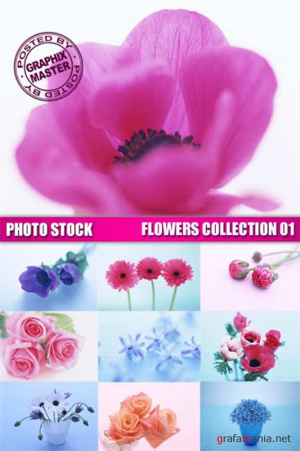 Photo Stock - Flowers Collection 01