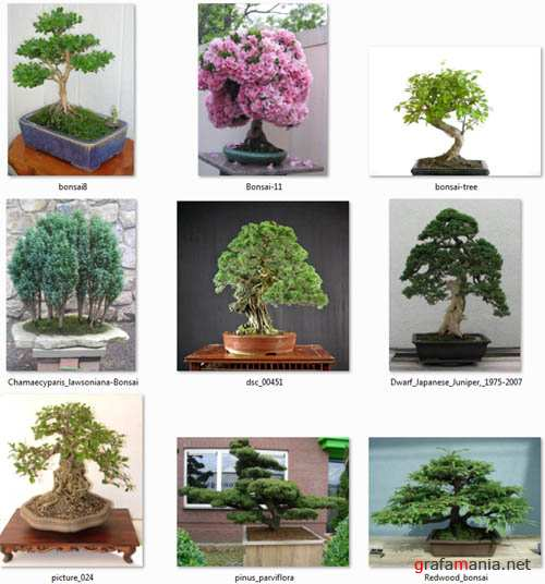 "Clipart  ""Bonsai"""