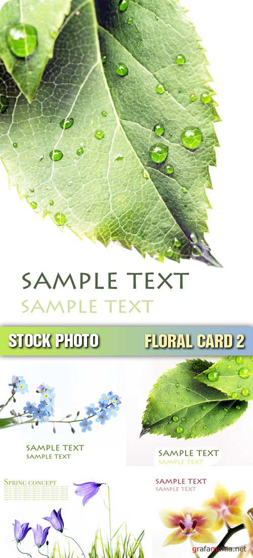 Stock Photo - Floral Card 2