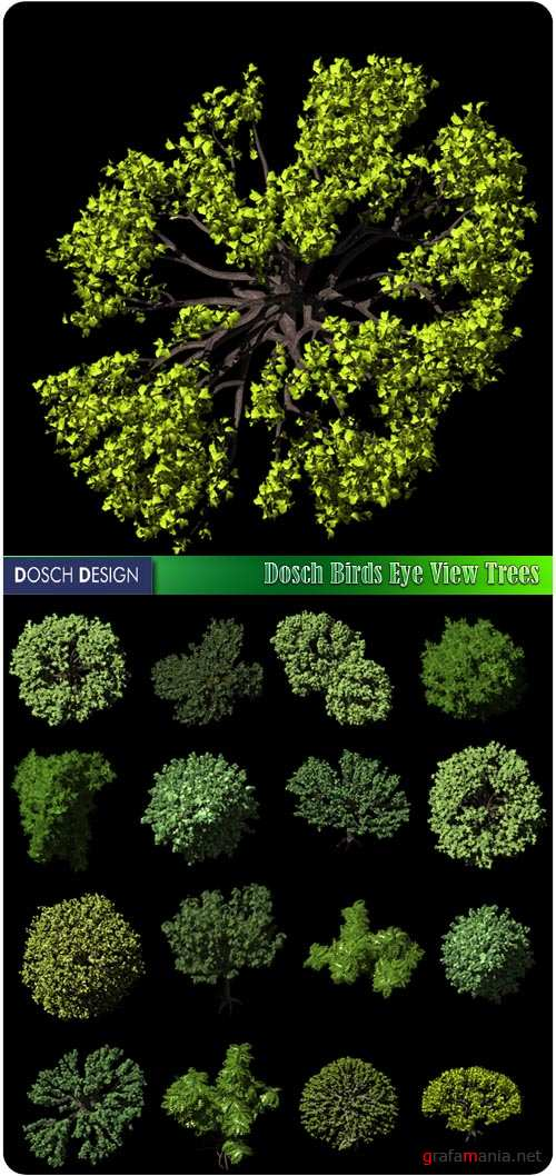 Dosch Birds Eye View Trees