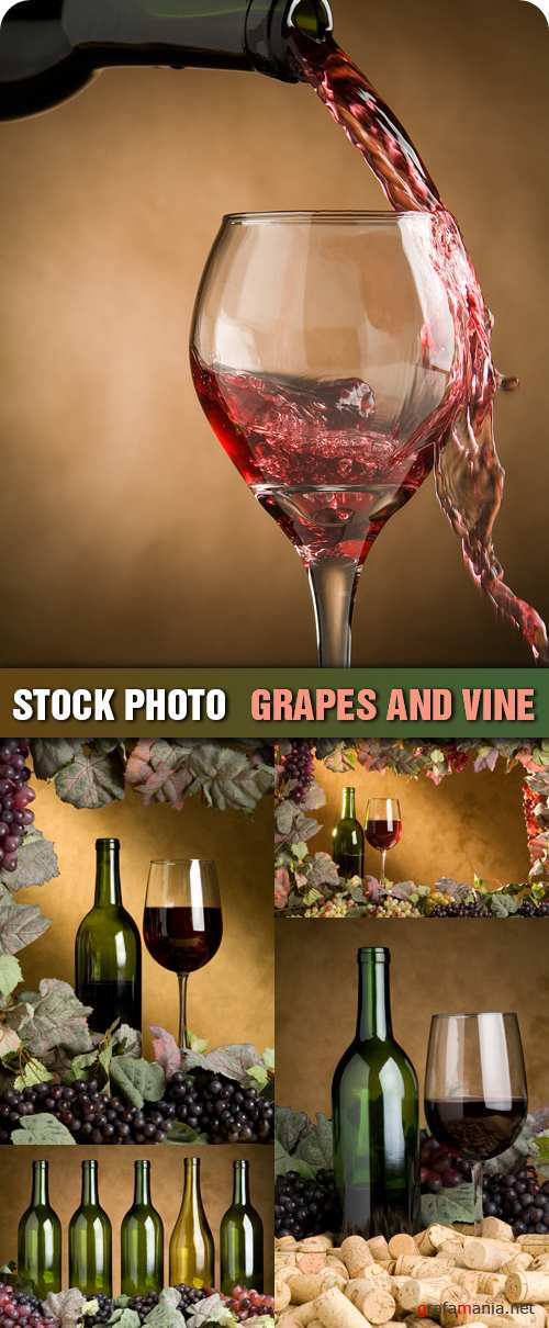 Stock Photo - Grapes and Vine