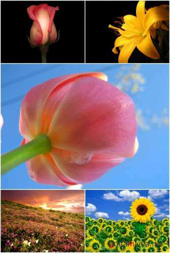 Wallpapers - Flowers Pack#4