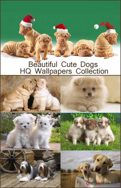 Beautiful Cute Dogs HQ Wallpapers
