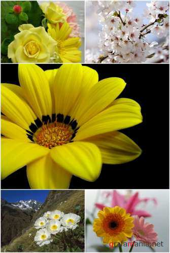 Wallpapers - Flowers Pack#6