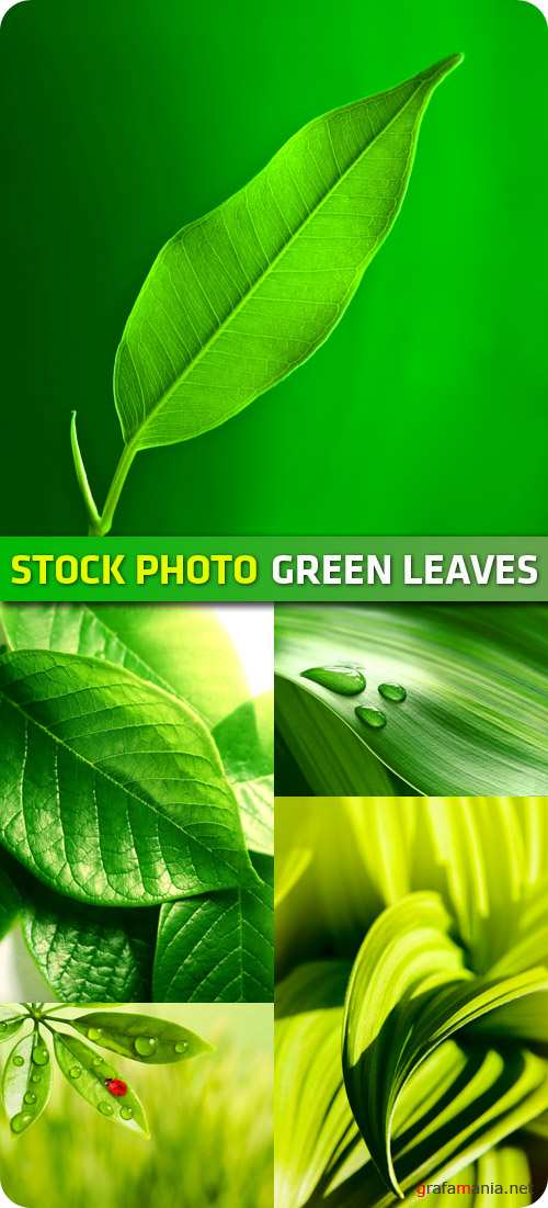 Stock Photo - Green Leaves