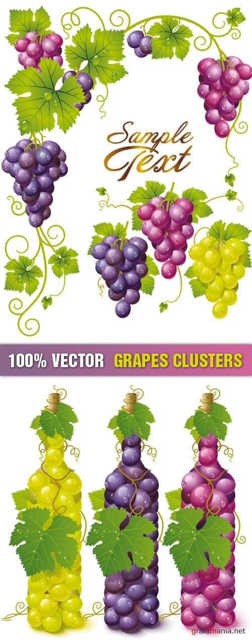 Stock Vector - Grapes Clusters