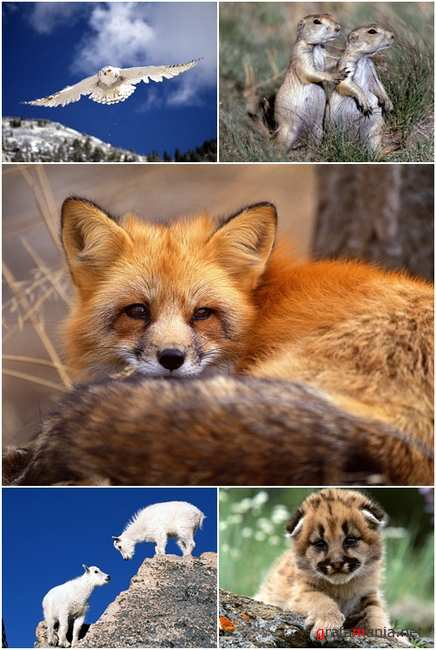 Wallpapers - Animal MIX Pack#4