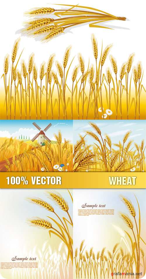 Stock Vector - Wheat