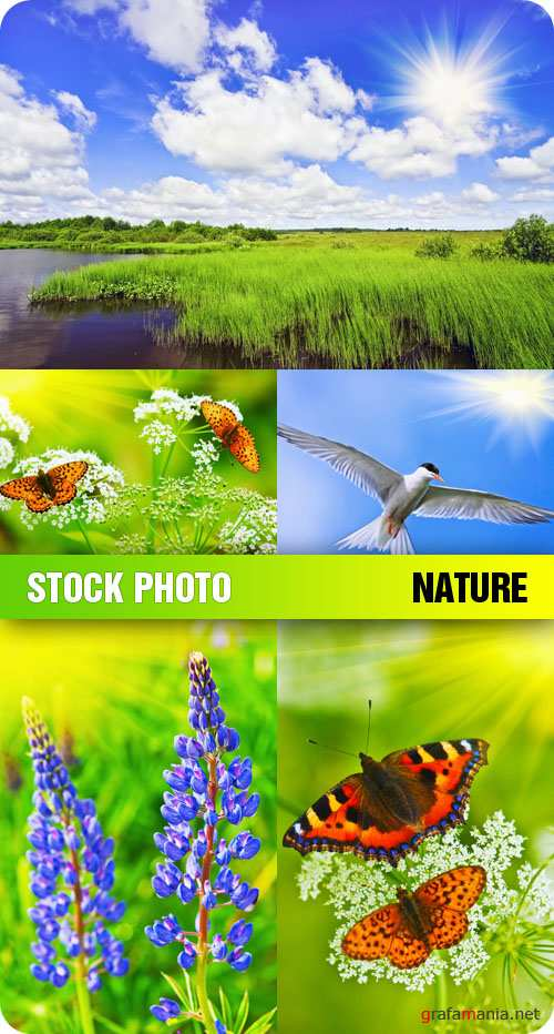 Stock Photo - Nature