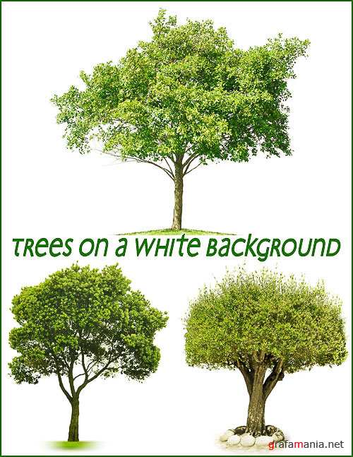 Trees on a white background