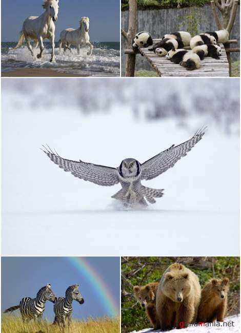Wallpapers - Animal MIX Pack#6