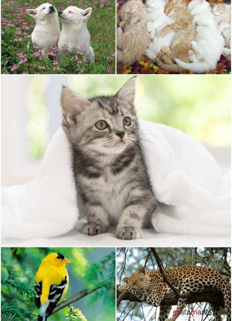 Wallpapers - Animal MIX Pack#7