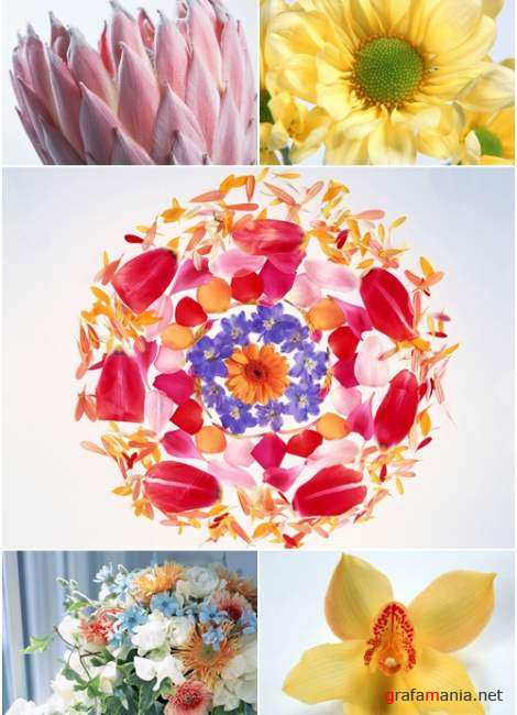 Wallpapers - Flowers Pack#8