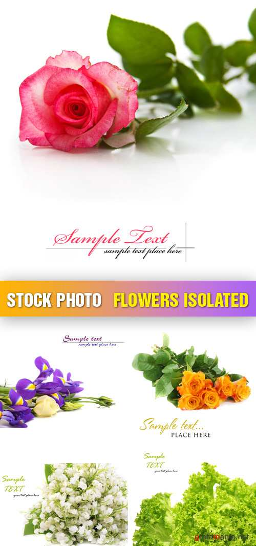 Stock Photo - Flowers Isolated