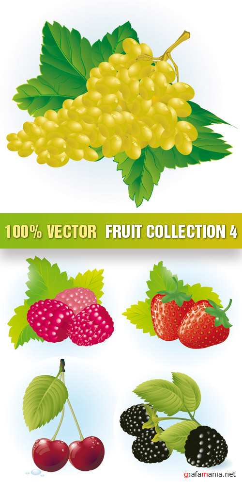 Stock Vector - Fruit Collection 4