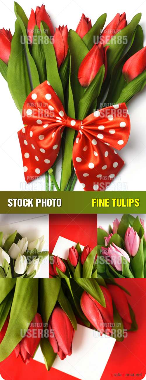 Stock Photo - Fine Tulips