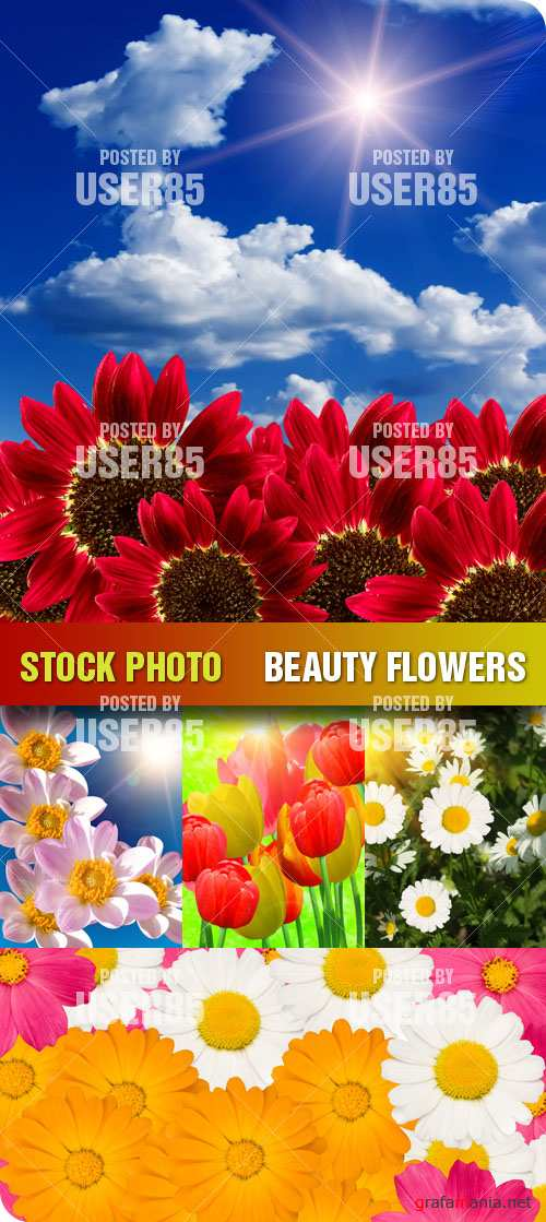 Stock Photo - Beauty Flowers