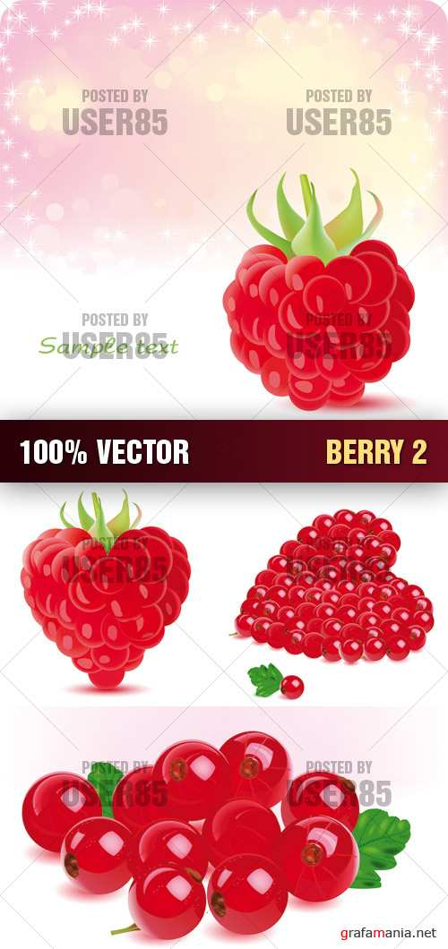 Stock Vector - Berry 2