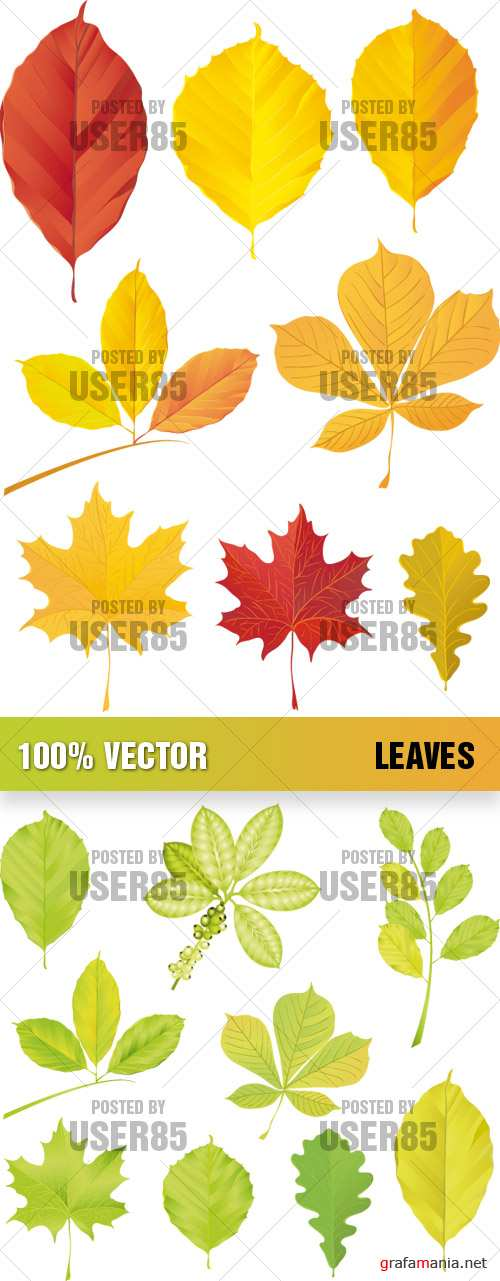 Stock Vector - Leaves