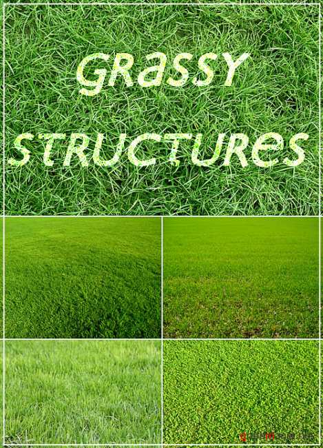 Grassy structures (texture)