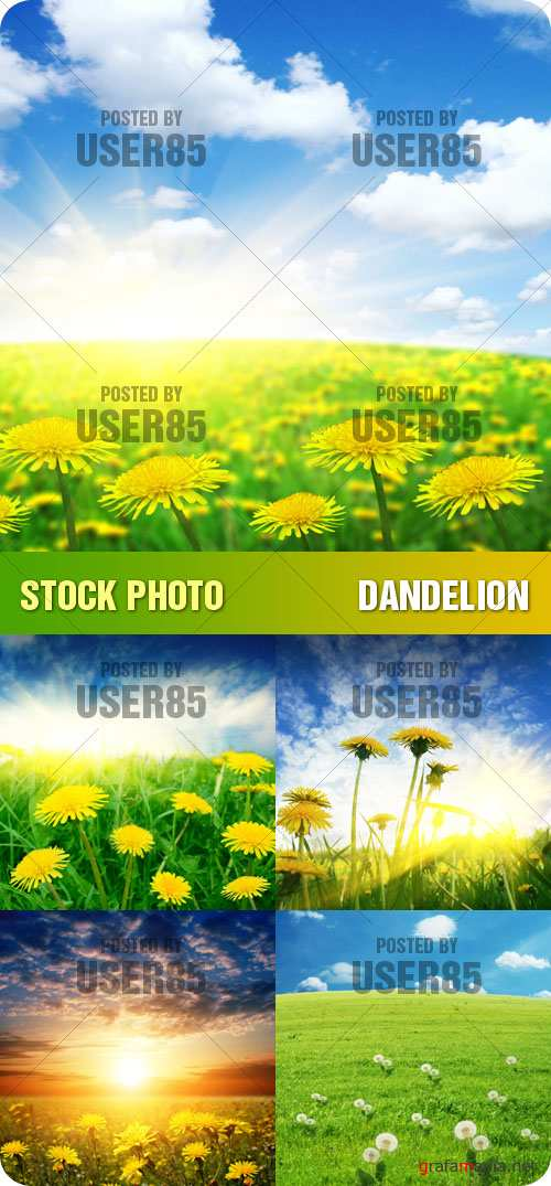 Stock Photo - Dandelion