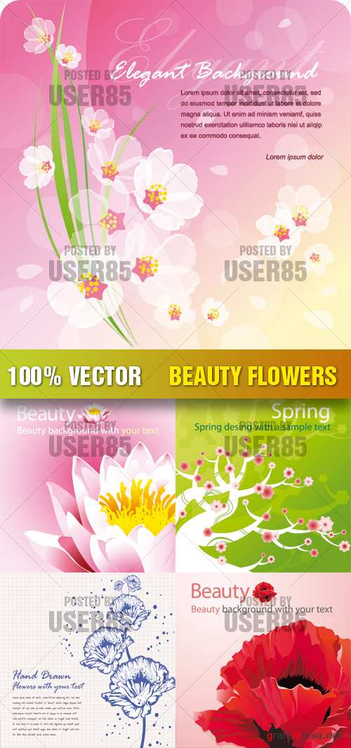 Stock Vector - Beauty Flowers