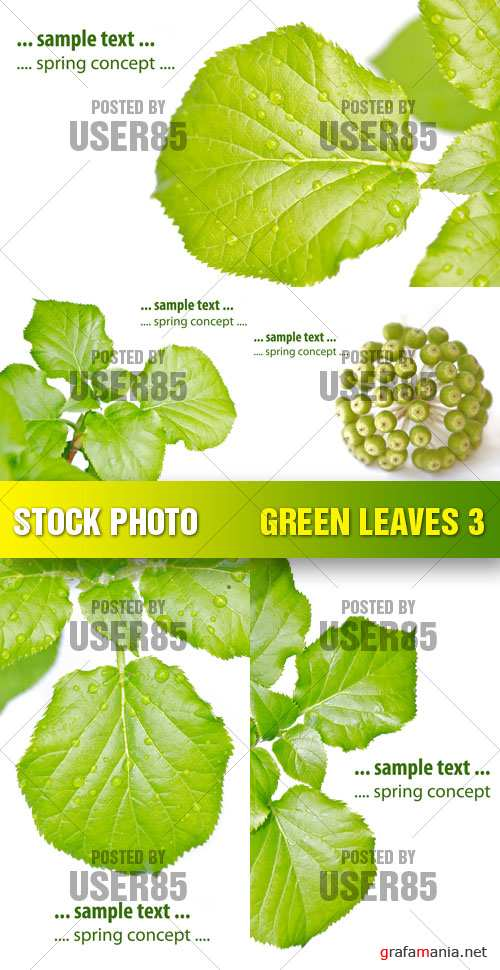 Stock Photo - Green Leaves 3