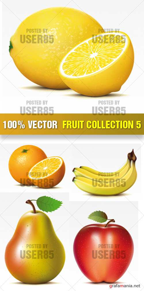 Stock Vector - Fruit Collection 5