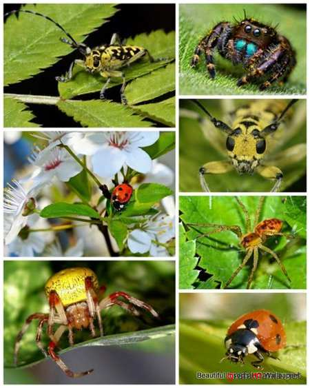 30 Beautiful Insects HQ Wallpapers