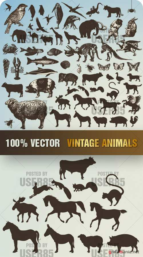Stock Vector - Vintage Animals