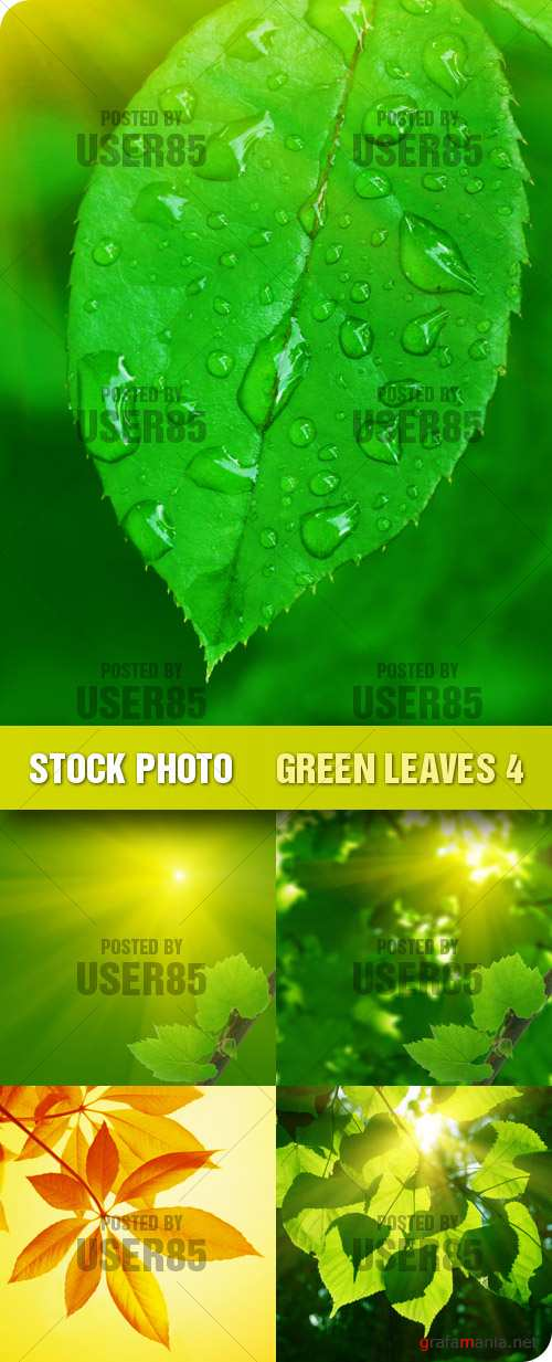Stock Photo - Green Leaves 4