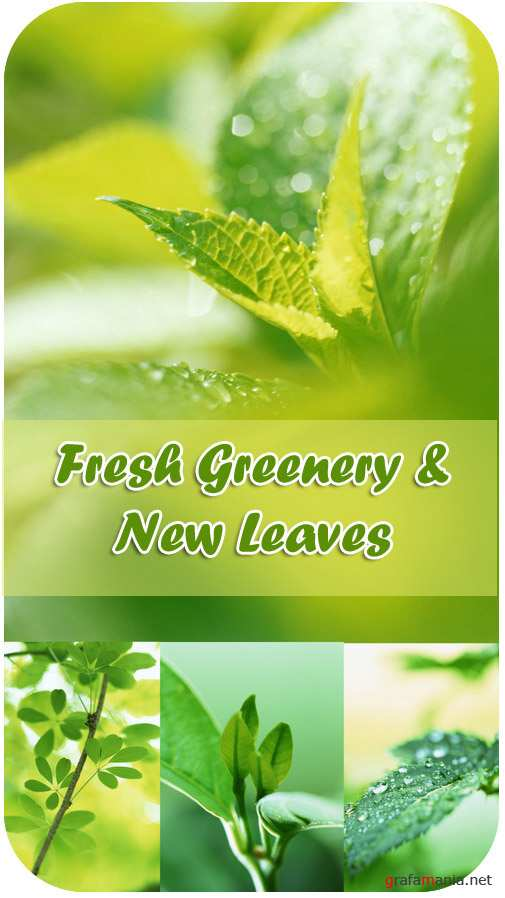 Stock Photos - Fresh Greenery & New Leaves