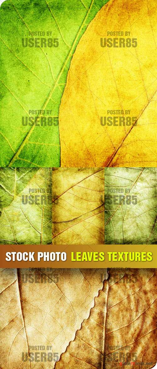 Stock Photo - Leaves Texture