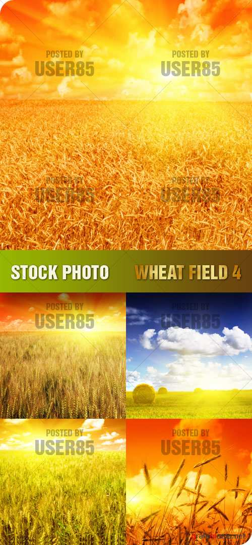 Stock Photo - Wheat Field 4