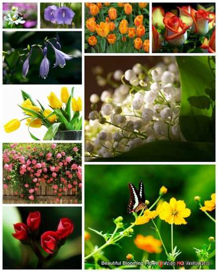 75 Beautiful Blooming Flowers Wide HQ Wallpapers