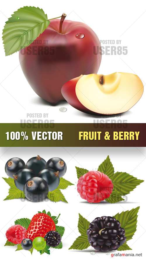 Stock Vector - Fruit & Berry