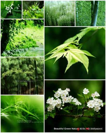 65 Beautiful Green Nature Wide HQ Wallpapers