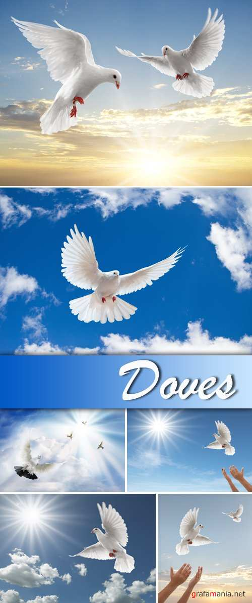 Stock Photo - Doves