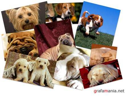 65 Cute Dogs Wallpapers