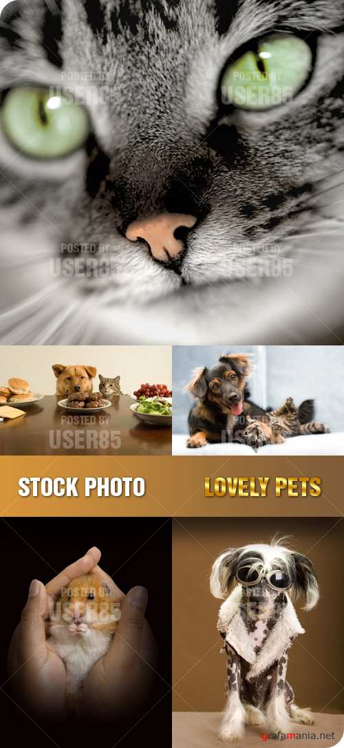 Stock Photo - Lovely Pets