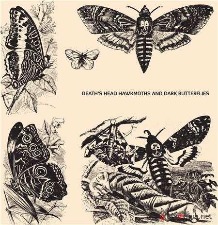 Deaths Head Hawksmoth Skull Moth Dark Butterflies