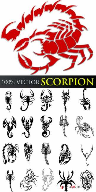 Stock Vector - Scorpion